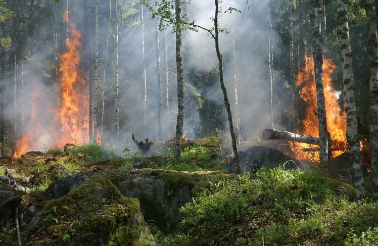 forest-fire-432870_960_720.jpg